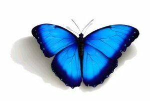 butterfly5e